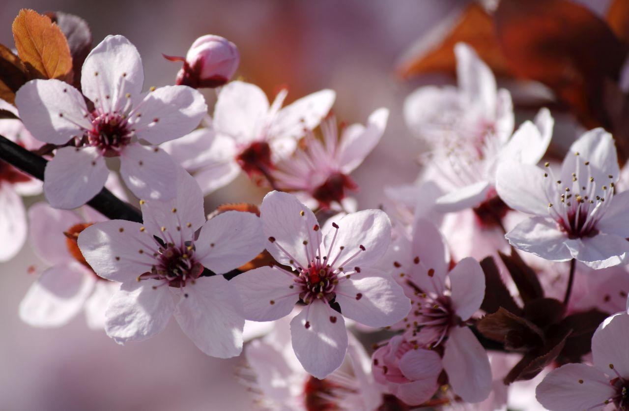 zen-flowers