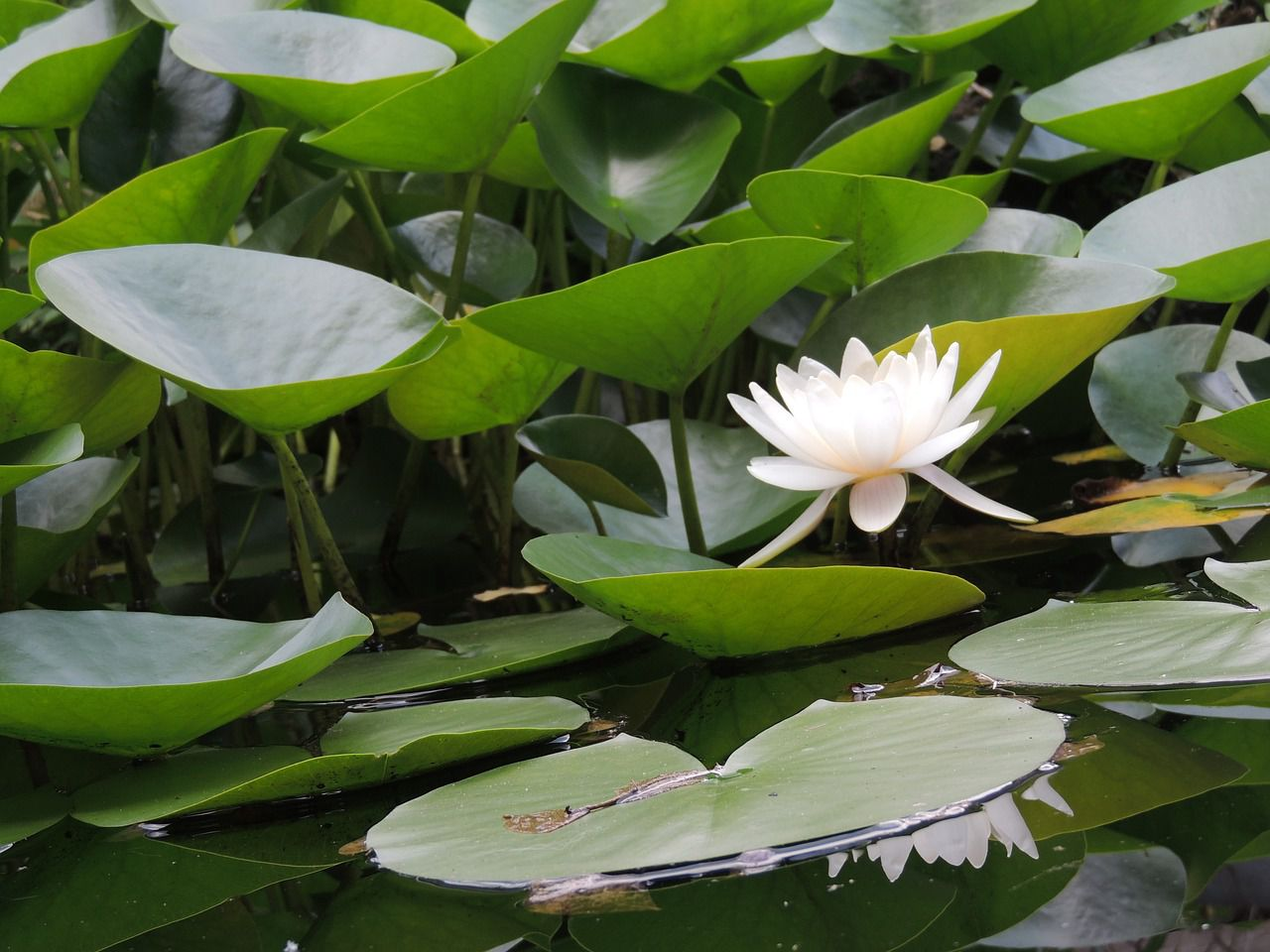 pond-2420487_1280